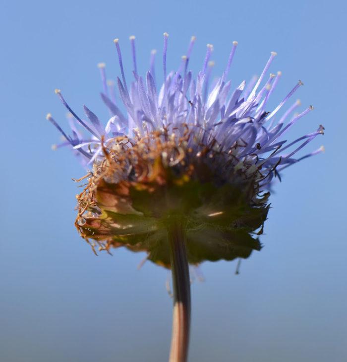 Fleurs dans le Luchonnais