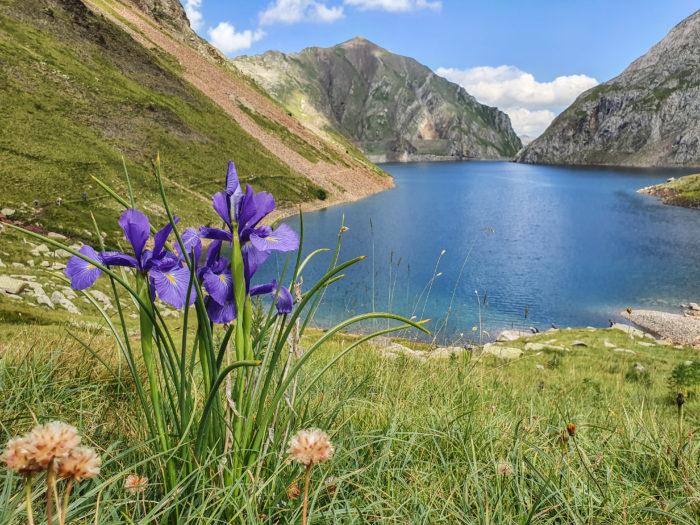 Fleurs du Vallibierna