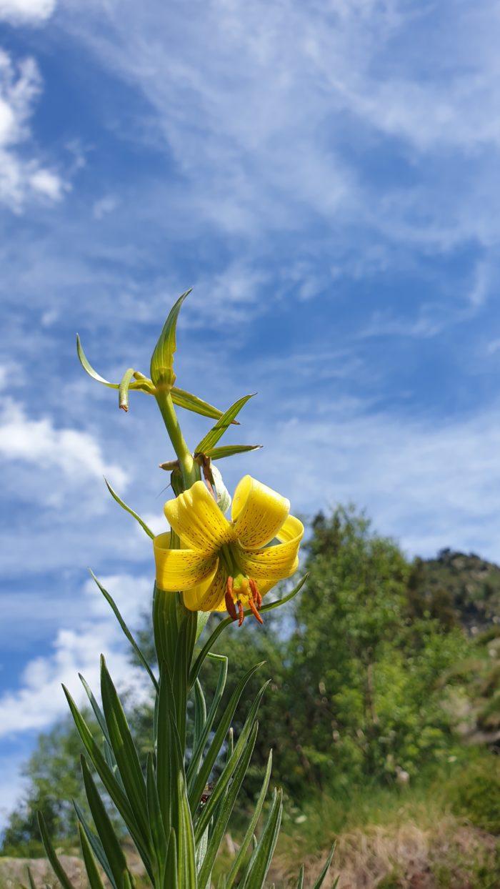 Fleurs de la Couillade des Bourriques